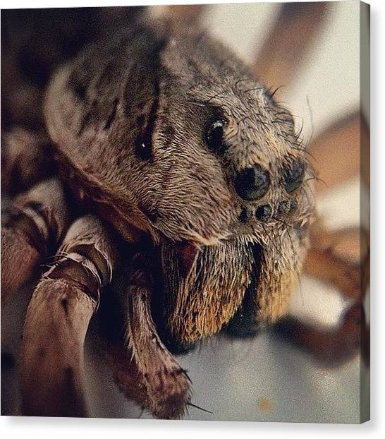 Spiders Canvas Print - The Amazing Spiderbear! by Brett Starr