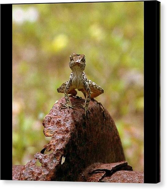 Lizards Canvas Print - The #angrylizard !!!! #angry #lizard by Danny Gonzalez