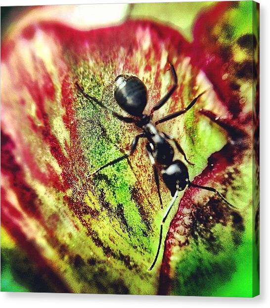 Insects Canvas Print - The Ants Have Arrived by Christopher Campbell