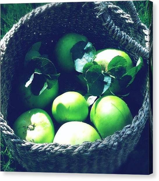 Fruit Trees Canvas Print - The #apples We #picked From Our #tree by Daniela Leach