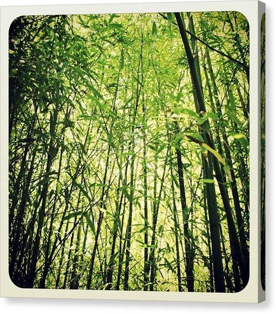 Bamboo Canvas Print - the Bamboo That Bends Is Stronger by Thanh Bui