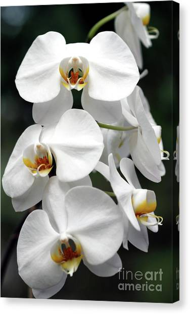 The Beauty Of Orchids  Canvas Print