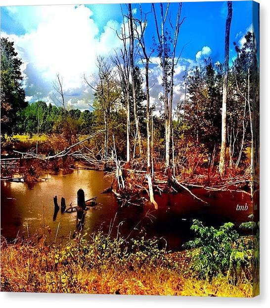 Marshes Canvas Print - The Beauty Of The Swamp by Tawanda Baitmon