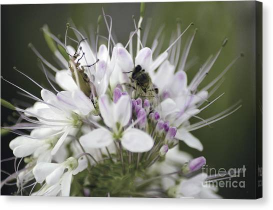 The Beetle And The Bee Canvas Print