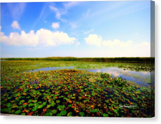 The Bog At Point Pelee Canvas Print