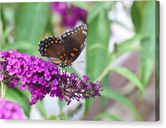 The Butterfly Tree Canvas Print by Janet Mcconnell