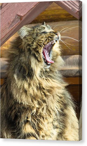 The Cat Who Loves To Sing Canvas Print