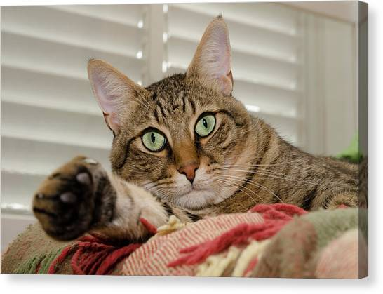 The Cat With Green Eyes Canvas Print
