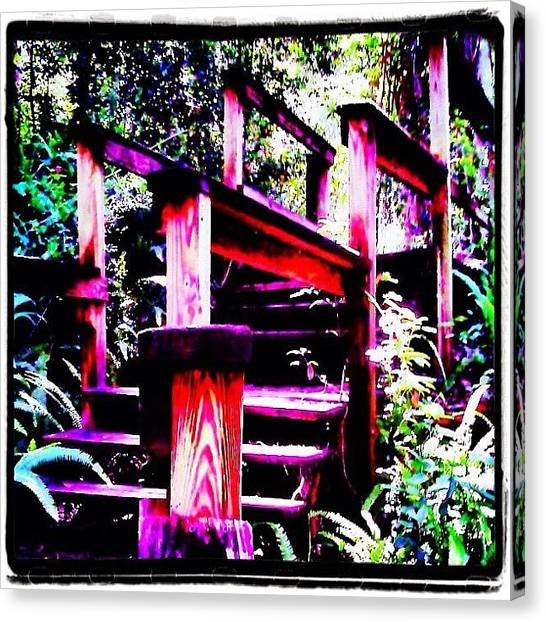Iphone 4s Canvas Print - The Climb Up - At Ravine Gardens State by Photography By Boopero
