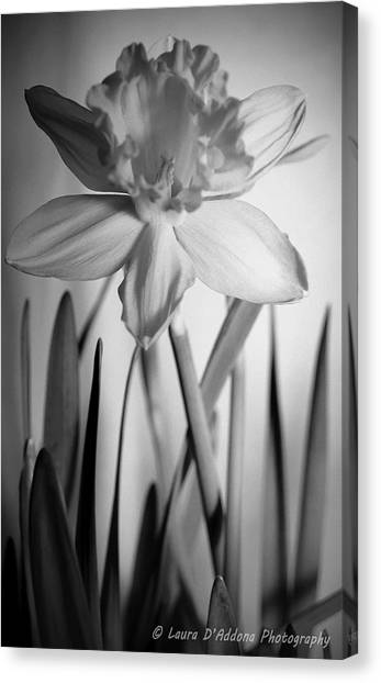 The Color Of Beauty Canvas Print
