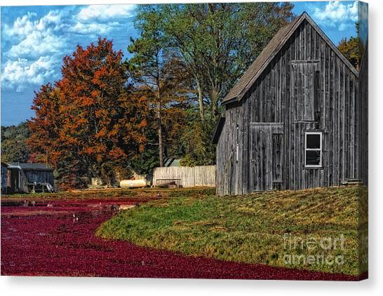 The Cranberry Farm Canvas Print