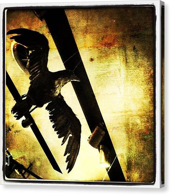 Large Birds Canvas Print - The Crow by Torgeir Ensrud
