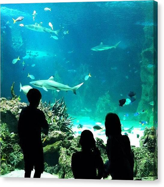 Hammerhead Sharks Canvas Print - The Curiosity Of Childhood & The by Brett Starr