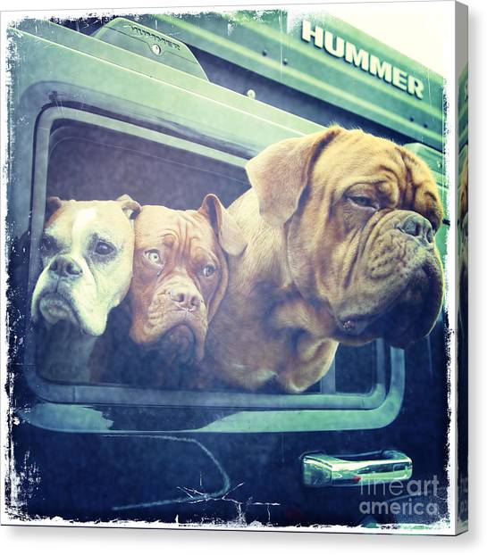 The Dog Taxi Is A Hummer Canvas Print