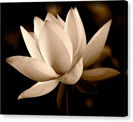 The Dragon Lily Canvas Print