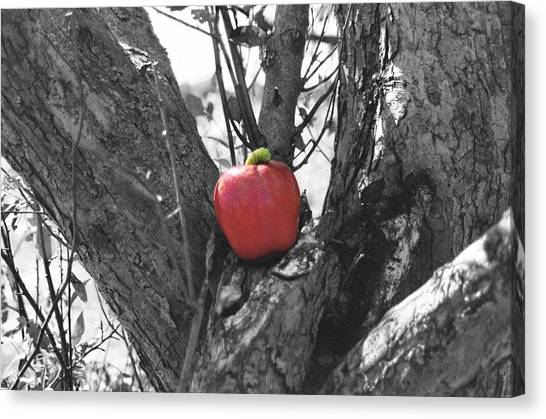 The Early Worm Gets The Apple Canvas Print by Paul Louis Mosley