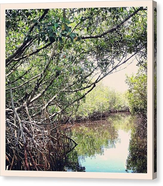 Swamps Canvas Print - The Everglades #water #trees #swamp by Sebastiaan Van der Graaf
