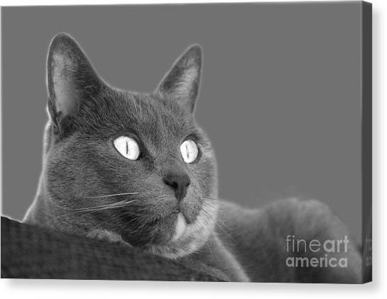 The Eyes Have It Canvas Print
