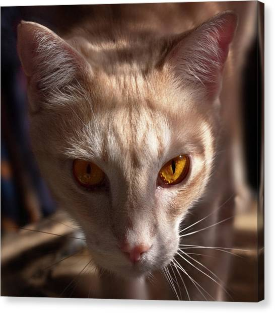 The Eyes Of Raymond Canvas Print