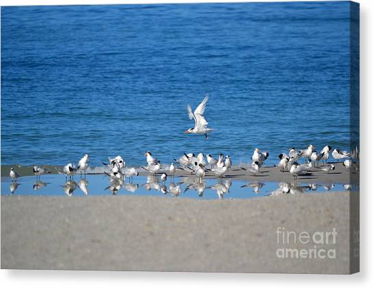 The Flock Canvas Print by Brenda Alcorn