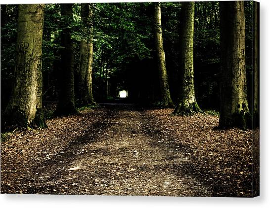 The Forest Tunnel Canvas Print