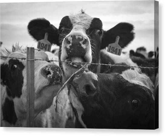 Canvas Print featuring the photograph The Girls by Priya Ghose