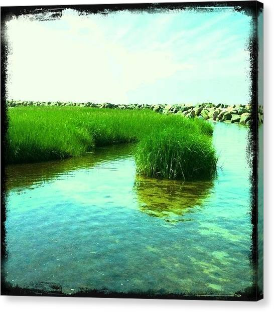 Seagrass Canvas Print - The Glow Of The Beach by David Rondeau
