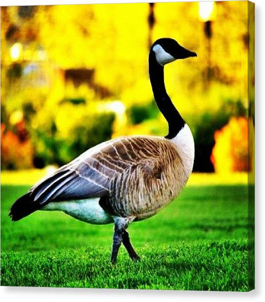 Geese Canvas Print - The Goose by Jason Thueson