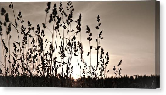 The Grass At Sunset Canvas Print