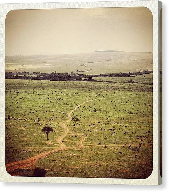 Kenyan Canvas Print - The Great Migration, Kenya by Owain Evans