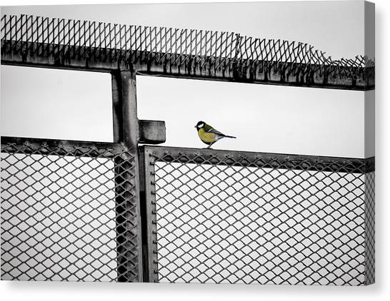 The Great Tit Canvas Print