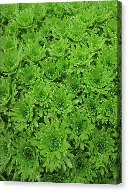 The Green Crowd Canvas Print