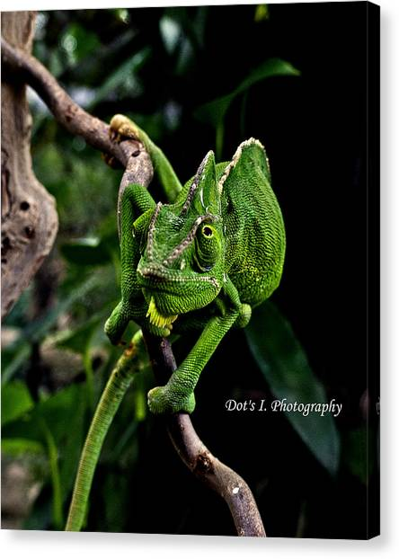 The Green Dude Canvas Print by Dorothy Hilde