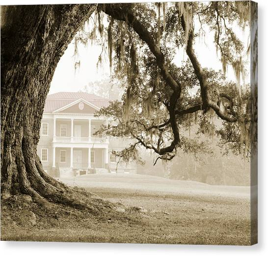 The Guardian Tree Canvas Print