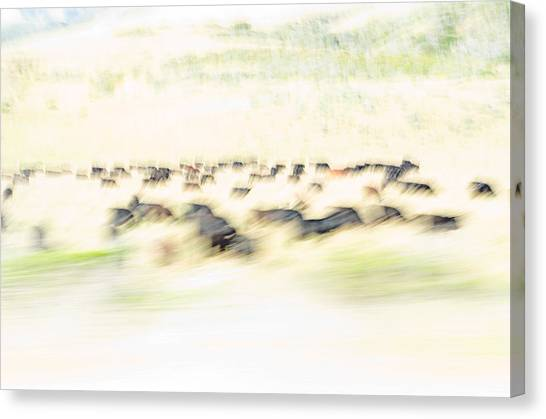 Canvas Print featuring the photograph The Herd by Margaret Pitcher