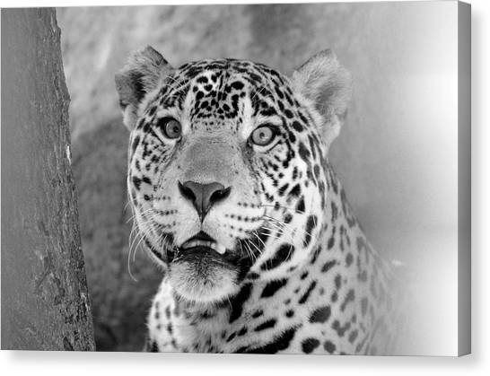 The Jaguar Spots You Canvas Print