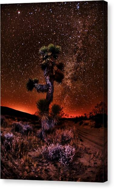The Joshua Tree At Night Canvas Print by Shane Lund