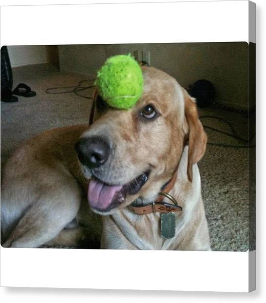 Tennis Ball Canvas Print - The Key To A Happy Life... Is Balance by David Scott