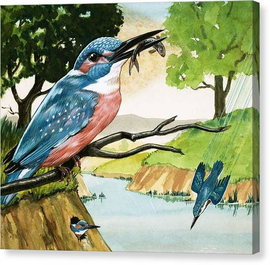Kingfisher Canvas Print - The Kingfisher by D A Forrest