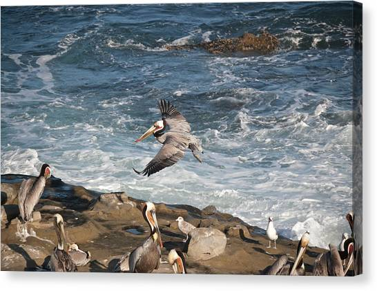 Canvas Print featuring the photograph The Landing by Margaret Pitcher