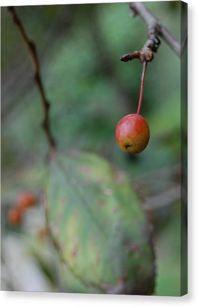 The Last Berry Canvas Print by Beverly Hammond
