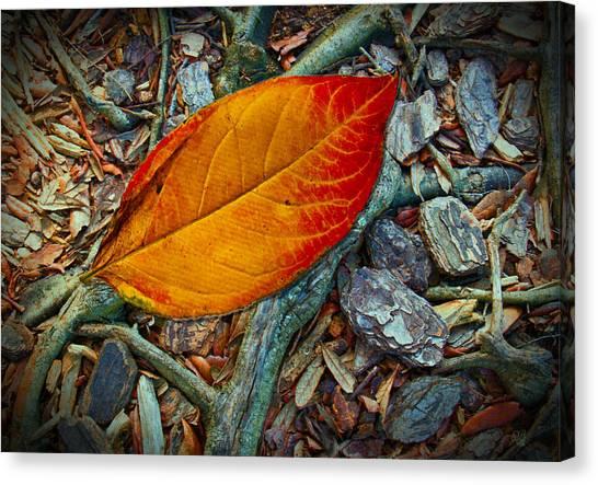 The Last Leaf Canvas Print
