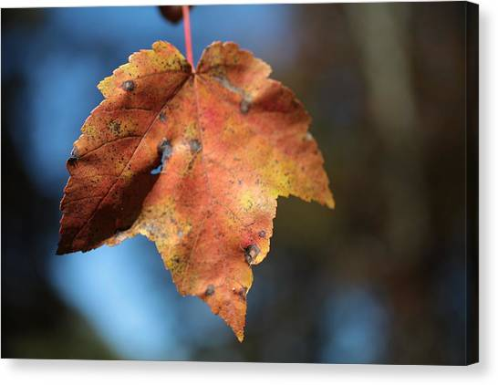 The Leaf Canvas Print
