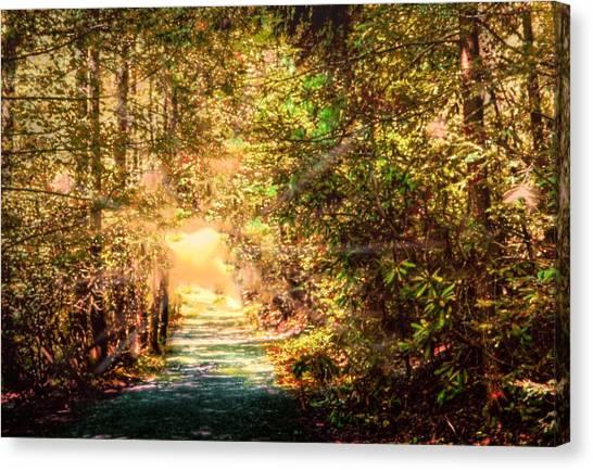 The Light Canvas Print by Barry Jones