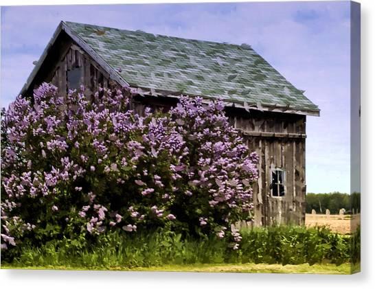 The Lilac Barn Canvas Print by Cheryl Cencich