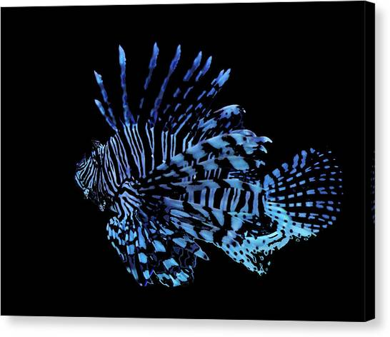 The Lionfish 3 Canvas Print by Robin Cox
