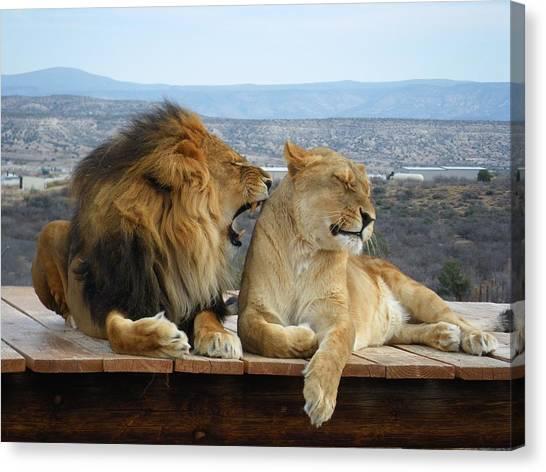 The Lions Canvas Print by Olga Vlasenko