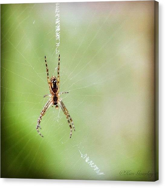 Spider Web Canvas Print - the Means To Gain Happiness Is To by Kim Gourlay