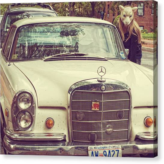 The Mercedes Sheep Canvas Print by Laura George