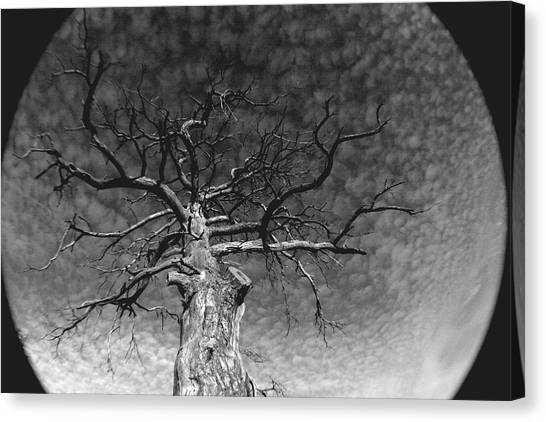The Moon Tree Canvas Print by Artist Orange